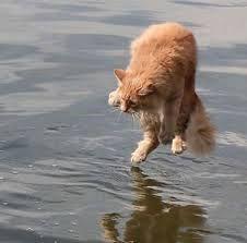 cat water